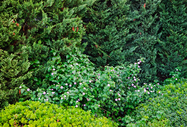 insect control for tree and shrubs