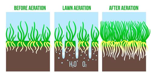 Lawn Aeration process