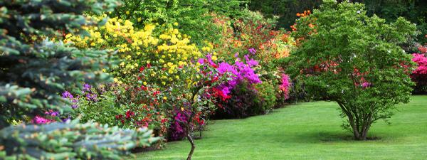 tree & shrub care