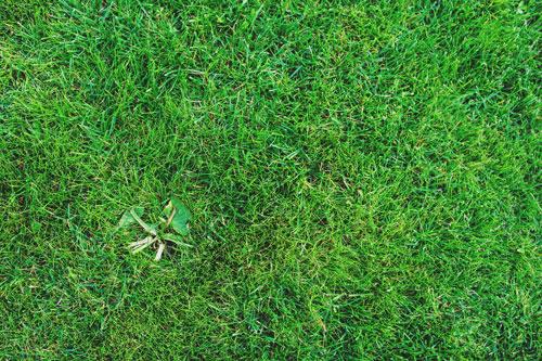 Weed Control Bio Green