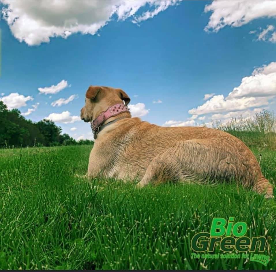 Natural lawn fertilization